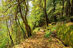 ASJ_ABC_2016006 (Joshi Anand) Tags: nepal camp india nature trek nikon base annapurna himalayas joshi anand 2016 giripremi anandjoshi