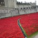 Poppies at the Tower of London by Jamie Kitson
