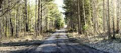 Stöpen (Robert Björkén (Hobbyfotograf)) Tags: road light forest country countryroad skövde ljus ensam grusväg landsväg stöpen donkelo