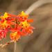 Uma orquídea