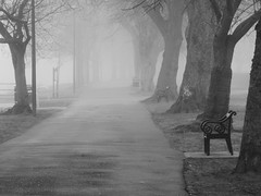Morning Fog (Tobymeg) Tags: park trees nature fog scotland dock walk seat dumfries