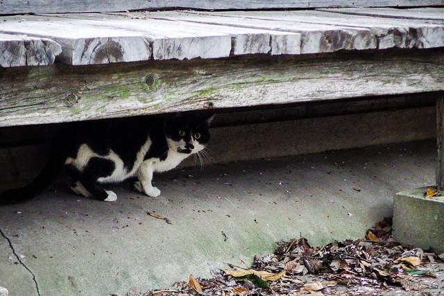 Today's Cat@2015-04-19