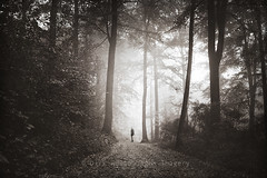 imperfect world (Dyrk.Wyst) Tags: autumn trees light mist painterly male fall nature monochrome leaves horizontal fog forest vintage germany landscape deutschland licht buchenwald blackwhite haze mood nebel darkness branches fineart laub herbst natur peaceful atmosphere dreamy conceptual wuppertal landschaft wald bume bergischesland atmosphre oneperson stimmung morgens dunkelheit dunst beechtrees buchen mngsten creativephotography photoshelter konzeptionell