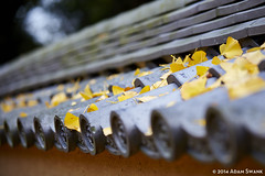 Focus (autoidiodyssey) Tags: autumn leaves yellow japan leaf nara narapark