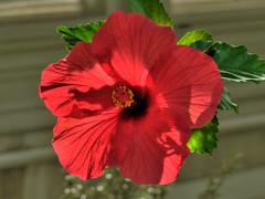 Chicago Botanic Garden (oksana8happy) Tags: leica flowers illinois edited greenhouse geotag hdr chicagobotanicgarden cameraraw photomatix tonemap 4exp vlux1 cbgflowers garmingeotag