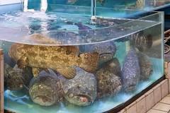 Lau Fau Shan Seafood 4 (l plater) Tags: china hongkong newterritories laufaushan