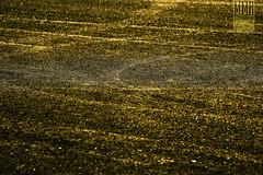 Gold asphalt (MMB Fotografia) Tags: mmb fotografa photography fotografo mmbfotografia valencia canon ff fx eos 1dsmkii luz light colores colors motor motorcycle canonef100400mmf4556lisiiusm motogp ef100400mmf4556lisiiusm cheste circuit ricardotormo gold asphalt