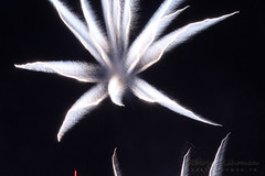 White Flowers (Lihoman...) Tags: light abstract art lines painting fire long exposure fireworks spot flare form burst splash shape sparks   lihoman