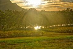 Golden Hue (Eustaquio Santimano) Tags: australia nsw wines pokolbin tyrells