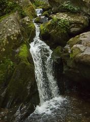 A Stream Approaches The Falls (gleavesm) Tags: water dark virginia moss rocks stream falls trail hollow shenandoahnationalpark