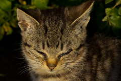 IMG_6044 (Lightcatcher66) Tags: florafauna makros katzencats lightcatcher66