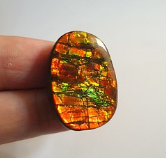 AMMOLITE STONE FOR SALE (The Ammolite) Tags: ammonite fossil  ammolite gemstone rock minerals mineral