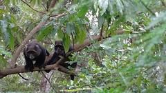 DSC04991 (morrisagaba) Tags: monkey ecopark nmaist