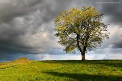Going Solo (Damon Finlay) Tags: tree scotland spring nikon edinburgh hill d750 tamron dramaticsky f28 caltonhill lonetree calton 2470 tamron2470f28 nikond750