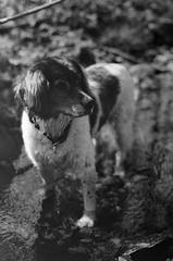 The dog (Tiefengeist) Tags: 50mm np 20 rodinal nikonfe 1100 oneshot orwo agfarodinal r09 orwonp20 ais50mmf12 rodinalr09oneshot1100