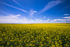 Canola Fields (IanLudwig) Tags: travel zeiss sony canola rapeseed batis sonyalpha vsco sonya7rii a7rii sonyilce7rm2 ilce7rm2 sonyalphaa7rii zeissbatis2818