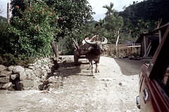 32-171 (ndpa / s. lundeen, archivist) Tags: rural village people nick dewolf nickdewolf 32 reel32 color photographbynickdewolf 1970s 1972 fall film 35mm winter republicofchina taiwan taiwanese eastcoast easterntaiwan hualien hualiencounty easterncoast rurallife unidentified driver cart wagon animal ox horns oxdrawn road dirtroad hills mountains building buildings house houses home homes thatchroof thatchedroof china chinese oxcart buffalo