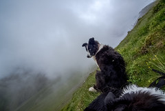 "26/52 ""This ledge ain't big enough for the both of us! .."" (JJFET) Tags: dog mist dogs for collie sheep 26 border weeks 52"