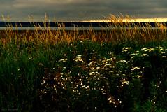 sky sliver (tom bourdot) Tags: light sunset summer sky cloud nature june clouds rural outside shadows dusk nj gimp wetlands sliver serene marsh nikkor tangle magichour forsythe refuge forsytherefuge nikond3300
