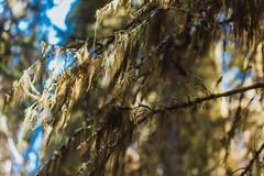 MH5_9230 (memories by Mark) Tags: rockies alberta banff rockymountains banffnationalpark johnstoncanyon