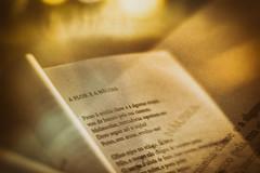 a flor e a nusea (Aline Magalhes Fotografia) Tags: poesia drummond cidade livro literatura rua amarelo noite textura fotografia sorocaba so paulo