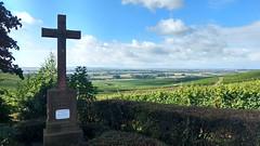 Ruh-Kreuz bei Zornheim (Frank Hamm) Tags: weinberge rheinhessen selzen