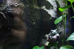 rrrrrribit (George De) Tags: london hornimanmuseum frog