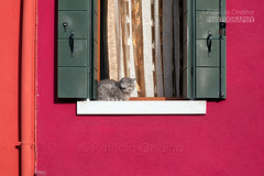 Need of colours ? Italy ! - Besoin de couleurs ? L'Italie ! (Patricia Ondina) Tags: italy italia italie burano coulour color couleur farbe red rouge rot outdoor window fentre fenster chat cat katze sleeping endormi
