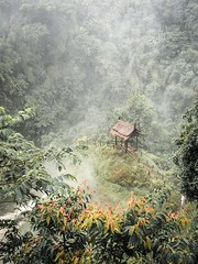 Hut at the waterfall (wianphoto) Tags: wood gut tree nature waterdroplets trees water jungle olympuspro1240mm folg olympusomdem5mark2 laos waterfall 2016 asia wianphoto