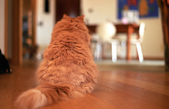 Romi (miriam.lonardi) Tags: pentaxmx pentax 35mm 50mm 50mm17 50mmlens 5017 film filmphotography filmlovers filmisnotdead filmlover colourfilm gatto gattorosso romeo rosso pelo cat redcat schiena analogicamera analogic animale animal felino