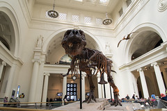 Sue (phil dokas) Tags: chicago skeleton illinois unitedstates dinosaur fieldmuseum sue tyrannosaur