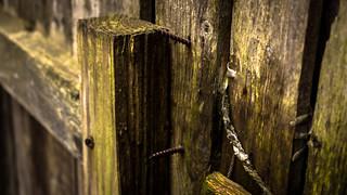 Moss Fence