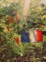 Bandeira de prece / Prayer flag (Márcio Vinícius Pinheiro) Tags: bandeira flag buddhism prayerflag budismo ktc budismotibetano lungta karmatheksumchokhorling cavalodevento bandeiradeprece