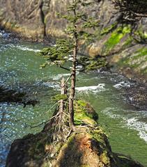 Dead Man's Tree