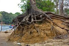 DSC_0183_2 (drs.sarajevo) Tags: india karnataka madikeri kaveririver dubareelephantpark