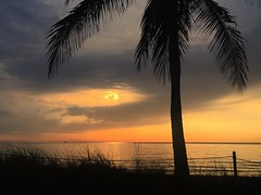 (Andy Royston / Ft Lauderdale Sun) Tags: photostream iphone6backcamera415mmf22