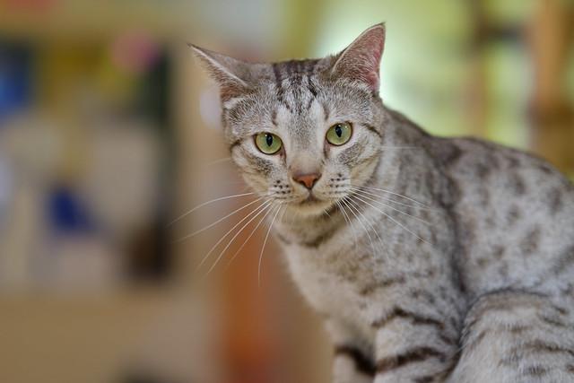ai-cat 09
