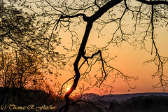 Sunrise Silhouette (travelphotographer2003) Tags: blue trees sky orange usa cloud tree weather silhouette clouds sunrise spring colorful skies bright glory may silhouettes dramatic brightness brilliance appalachianmountains alleghenymountains parousia beautyinnature