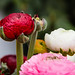 """2015_Floralia_Brussels-94 • <a style=""""font-size:0.8em;"""" href=""""http://www.flickr.com/photos/100070713@N08/17831768495/"""" target=""""_blank"""">View on Flickr</a>"""
