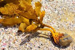 Hanging On (Paul Hollins) Tags: ocean seascape macro rocks australia newsouthwales aus sealrocks nikon1635mmf4 nikond750