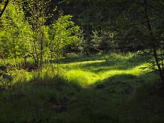 Waldmorgen (bratispixl) Tags: traunreut stadtrundweg chiemgau oberbayern germany bratispixl sonnenfotografie sonnenaufgang tele blumengarten lichtwechsel schrfentiefe fokussierung spot naturfotografie dokumentation