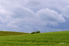 Fields (A. Tadic) Tags: blue sky green nature field weather clouds bush wheat hill serbia simplicity agriculture shrub minimalism middle vojvodina srbija frukagora