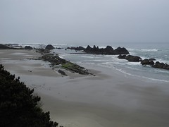 2016-04-27_DSCN5277 (becklectic) Tags: beach oregon pacificocean oregoncoast tidepools sealrock 2016