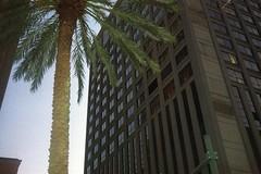 mid city new orleans, la usa (avsleymvrie) Tags: sky building youth 35mm nikon louisiana scenery neworleans palmtrees 35mmfilm palmleaves