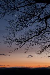 New moon (t s george) Tags: sunset moon color tree newengland crescent explore harvardma canon5dmarkii