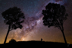 Tiny Giants (dualiti.net) Tags: trees sky up silhouette night way stars outside photography photo looking humanity time think deep astro explore thoughts astrophotography future queensland giants milky stargazing milkyway lookingforward