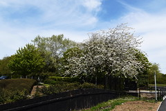 DSC_1179 Calcot (PeaTJay) Tags: flowers trees plants macro nature gardens fauna outdoors reading flora parks micro closeups berkshire bushes calcot tilehurst nikond750