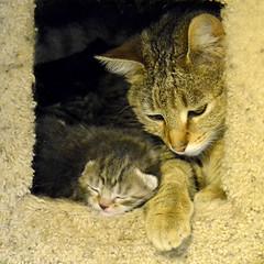 20160419_GorgeousKitten_2901_5x5 (Creativeleigh Shot...by LeighAnneD) Tags: cats cat feline outdoor kittens neighborhood litter felines