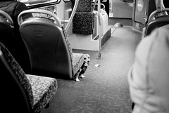 A Dog Of The Bus - South Shields (Richard James Palmer) Tags: street camera new uk portrait england urban blackandwhite dog white abstract black bus art film monochrome 35mm newcastle photography trapped shoot gloomy iso400 fineart north streetphotography documentary overcast gritty ishootfilm tyne east iso contax ilfordhp5 400 walkabout epson hp5 analogue melancholy northern northeast ilford isolated upon compact newcastleupontyne t2 tyneandwear 2016 v700 microphen filmisnotdead ilfordmicrophen epsonperfectionv700