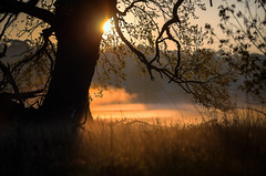 Gold (k.tusnio) Tags: morning tree nature landscape for nikon dof bokeh poland d5100